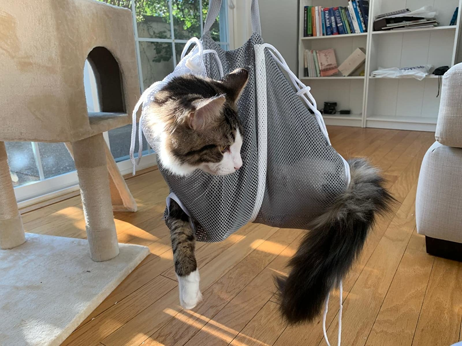 Review photo of the grey cat shower and grooming net bag
