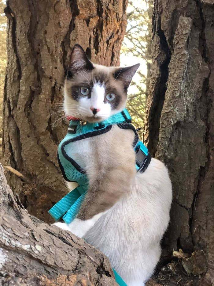 Review photo of the emerald cat harness and leash