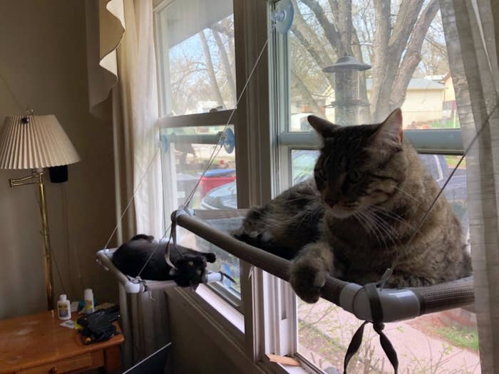 Review photo of the black cat window hammock