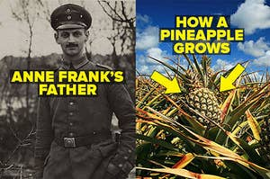 Anne Frank's father Otto and how a pineapple grows