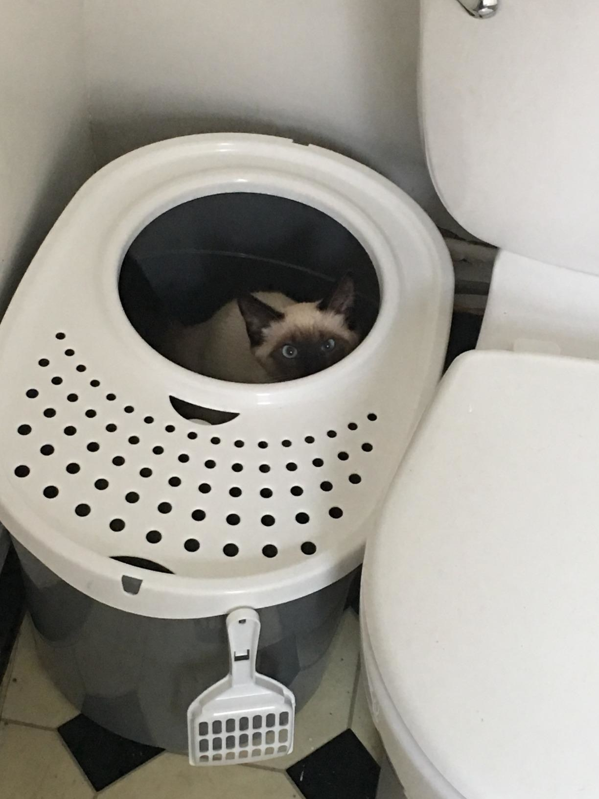 Review photo of the gray/white litter box