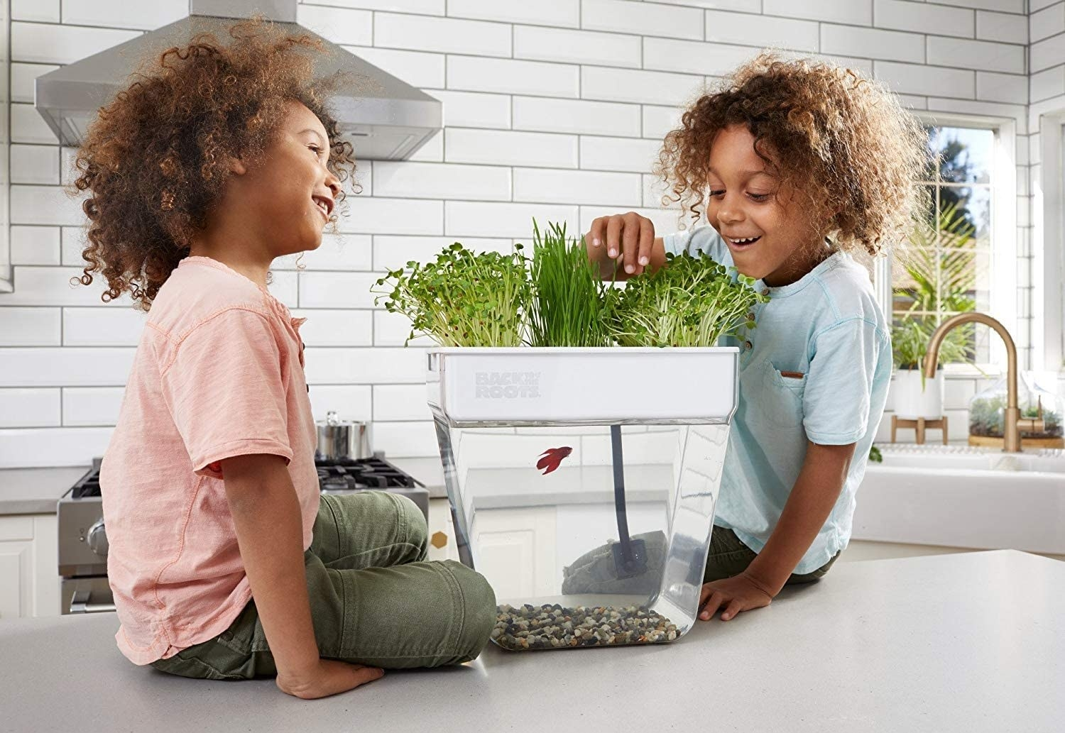 Two children looking at the plants growing above their beta's fish tank