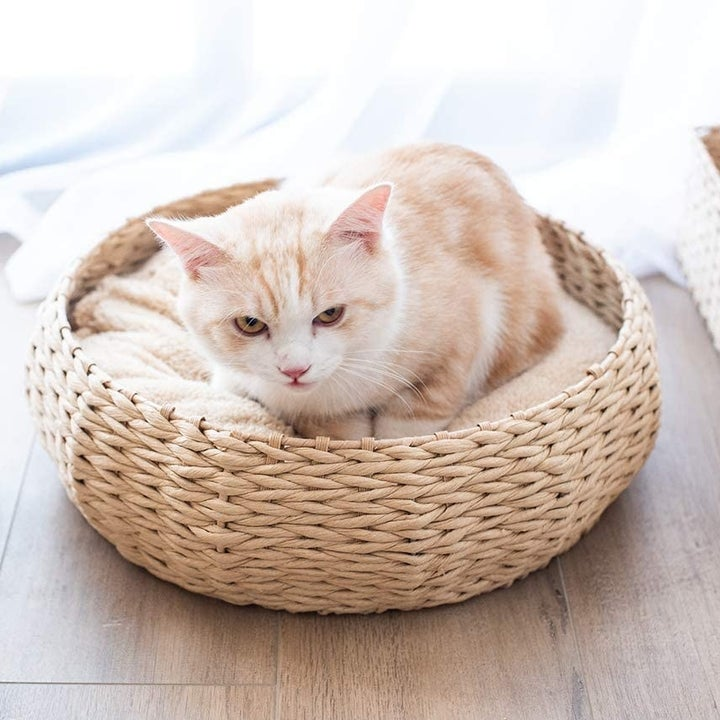 Round wicker bed with pillow and cat resting on top
