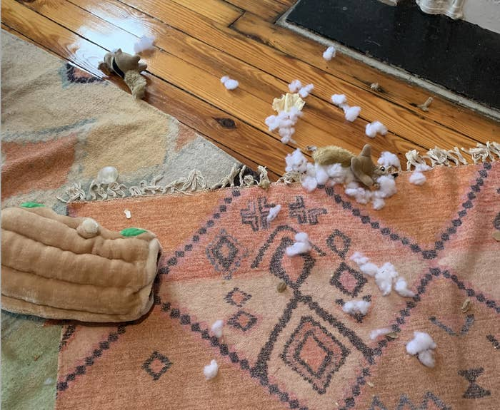 a picture of the stuffing of a toy strewn across the floor