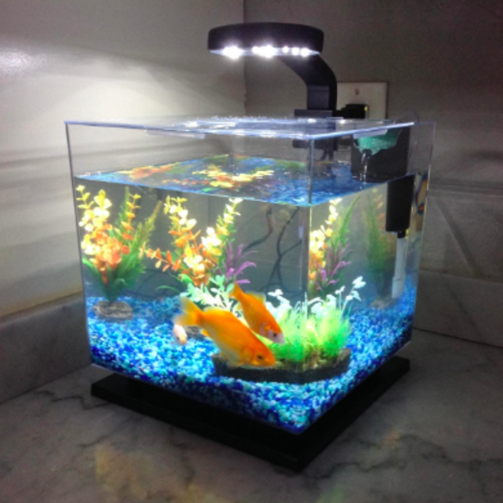 Clear cube tank with goldfish inside. It has a light on top