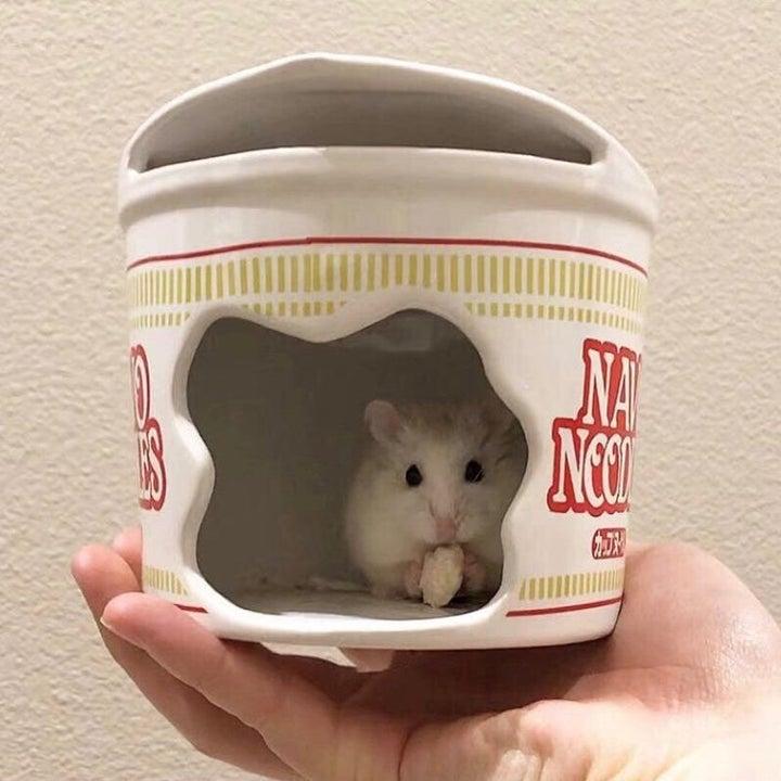 Hamster inside ceramic hideout