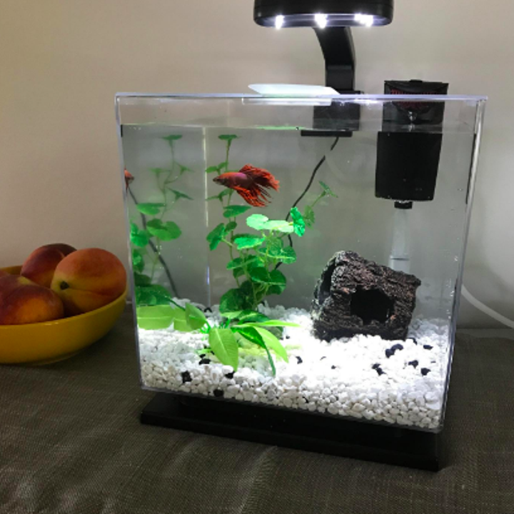 Beta inside the same tank with more minimalist decor