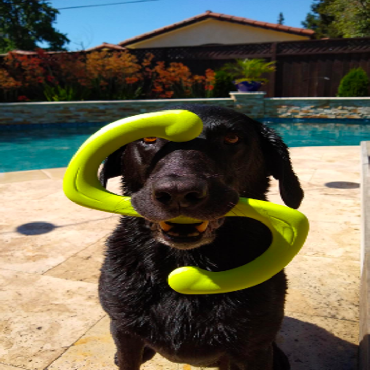 "Dog beside swimming pool holding the ""S"" shaped rubber toy in its mouth"