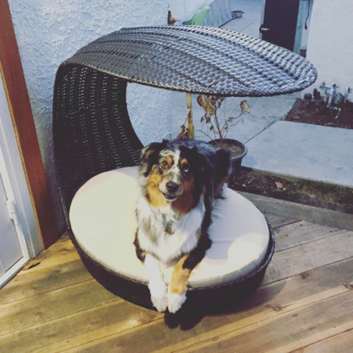 Reviewer's dog sitting on a round porch bed with a curved top to provide shade