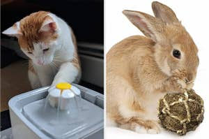 left image: cat with water fountain, right image: rabbit with toy ball