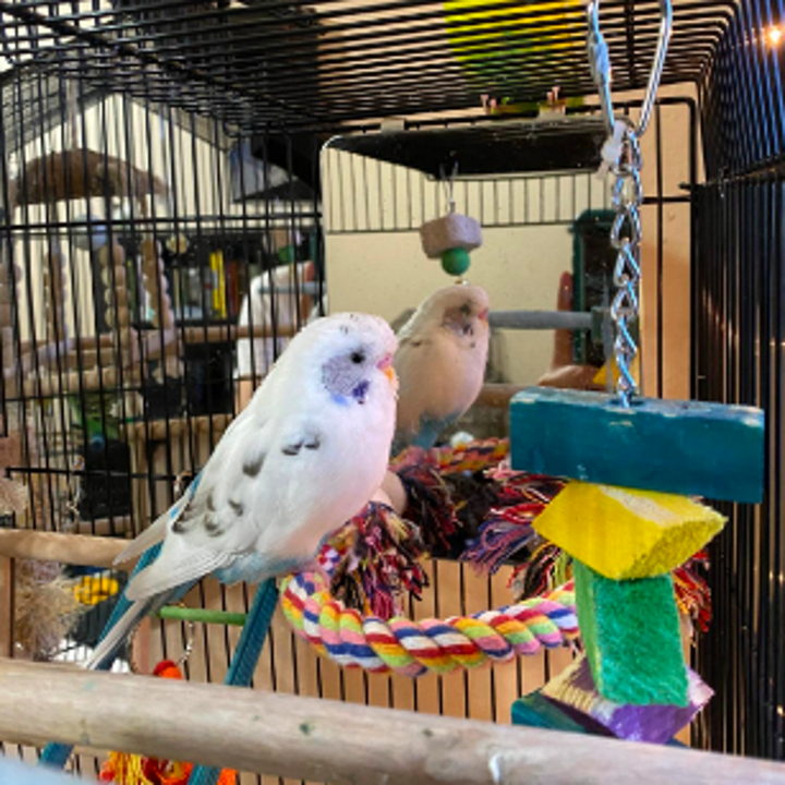 Reviewer's bird beside the mirror and sitting on the rope perch