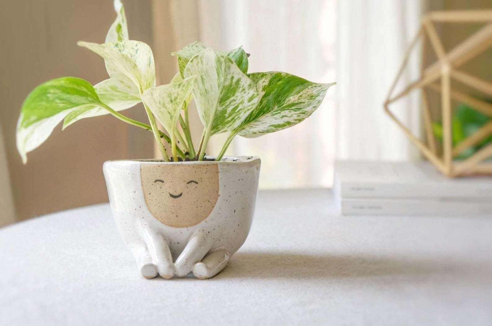 the ceramic pot holding a plant