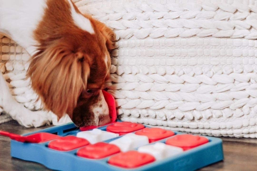 a dog playing with the toy