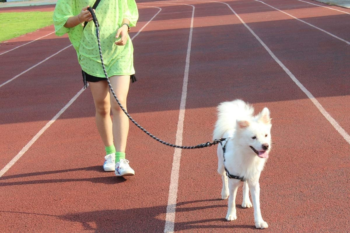 an owner walking it's dog with the leash