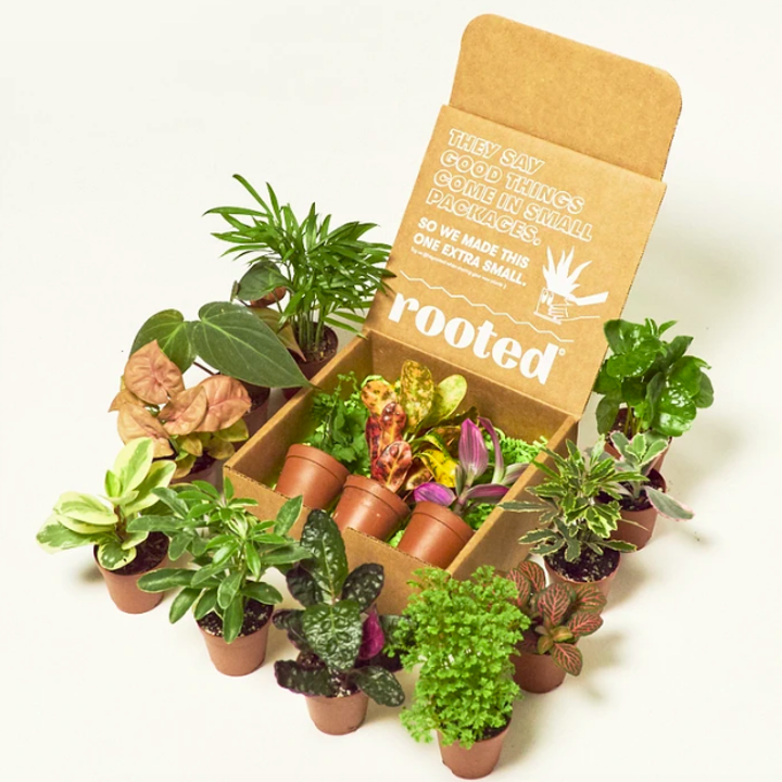Dozens of plants beside box packaging, showing the different varieties you may receive