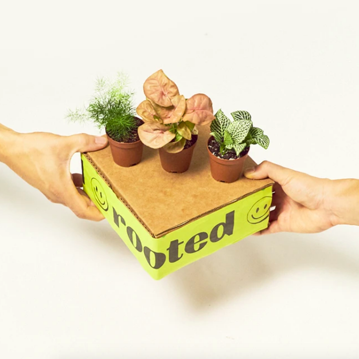 Three small plants on top of box packaging held by two hands