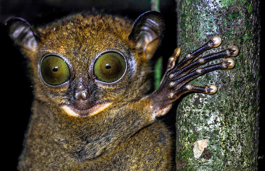 A tiny creature, whose eyes take up 25% of its body, gripping a small branch
