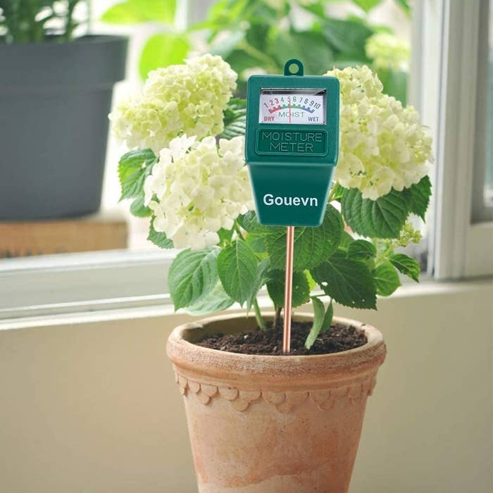 The moisture meter inserted into a potted plant
