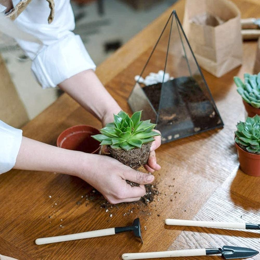 A person using the kit to transplant a succulent