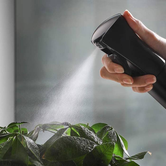 A close up of someone using the mister on their plants