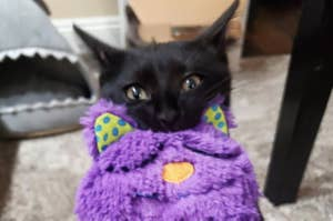 reviewer photo showing their black cat cuddling with the purr pillow