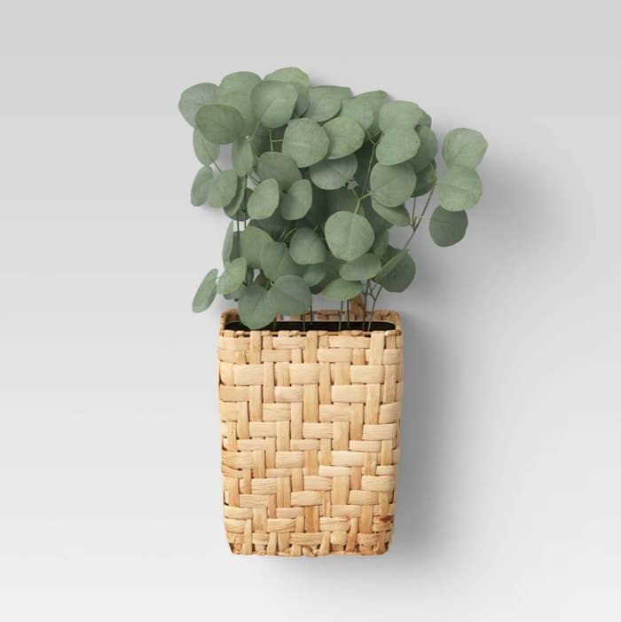 The plant in a wooven basket