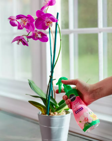 Someone spritzing the orchid food into a pot