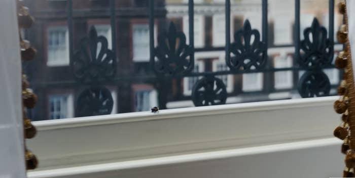 A bee on a window sill