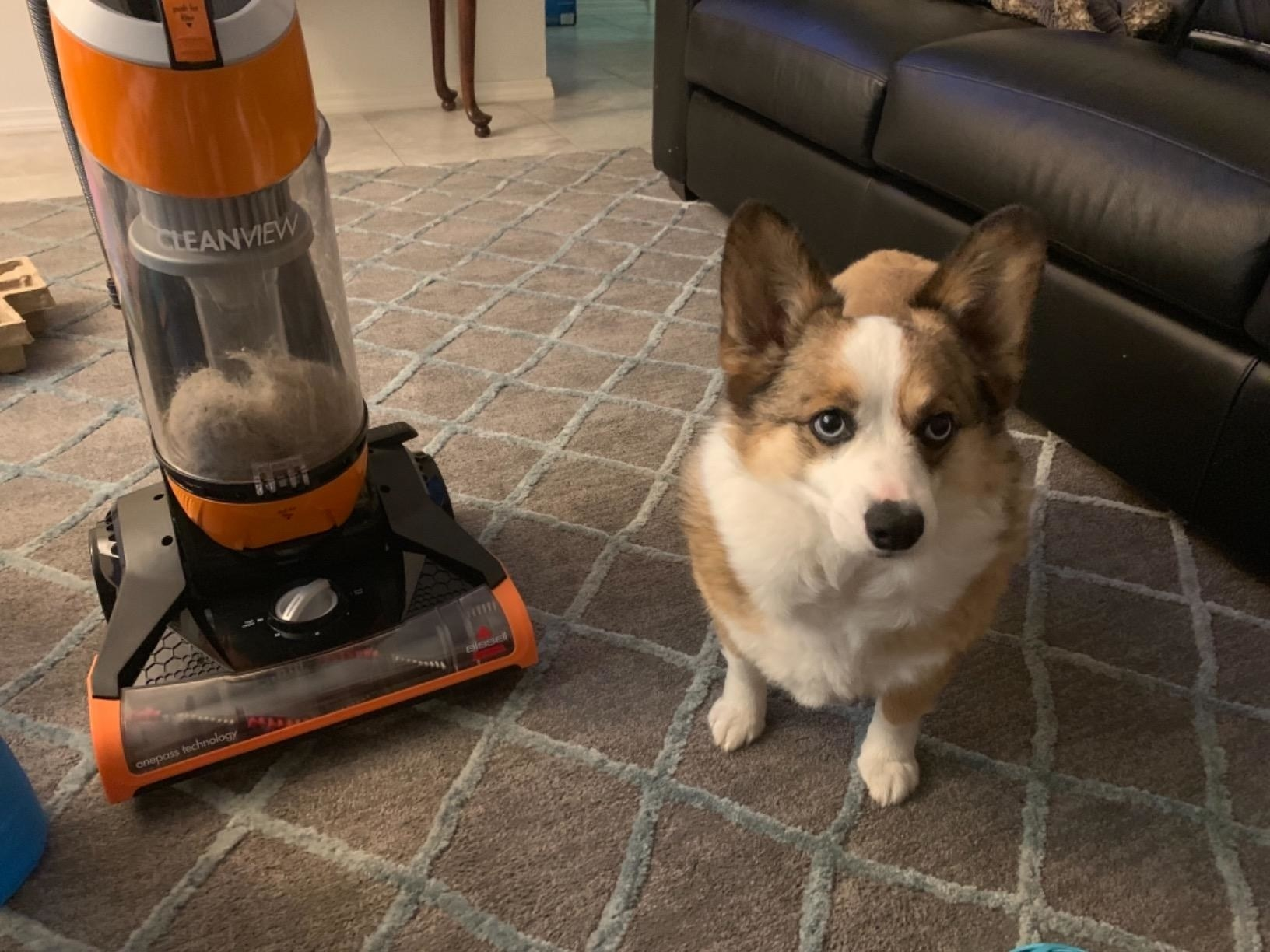a reviewer's dog sitting next to their vacuum which is full of fur