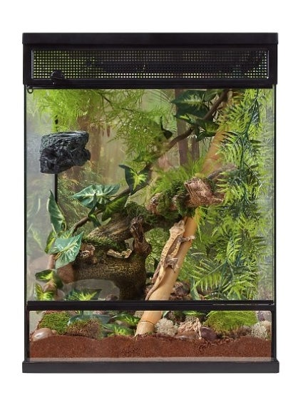 The reptile terrarium in clear with lush leaves and branches inside