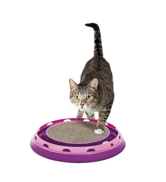 Cat perched on a purple round scratcher