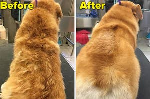a before and after photo for a dog grooming brush