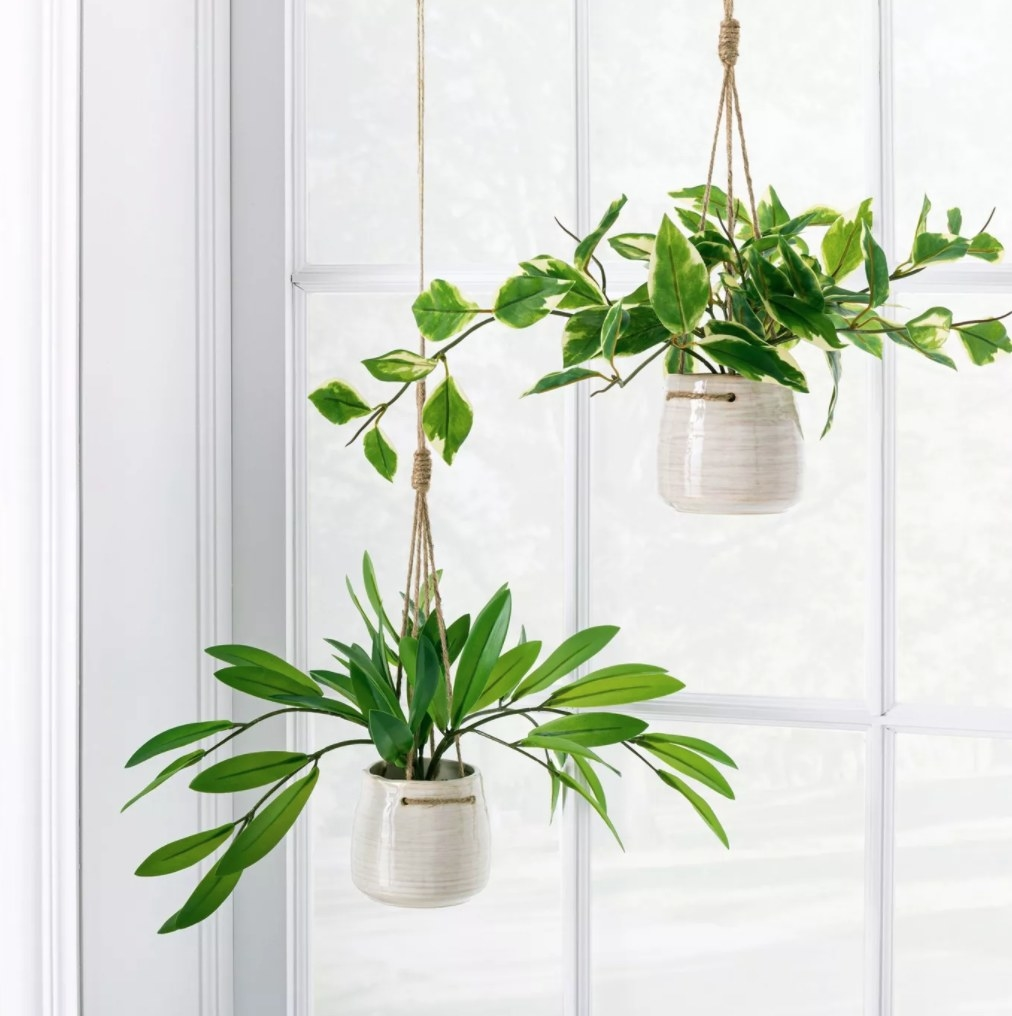 the plant hanging in the window