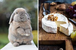 On the left, a bunny standing on its back legs, and on the right, some baked Camembert topped with walnuts