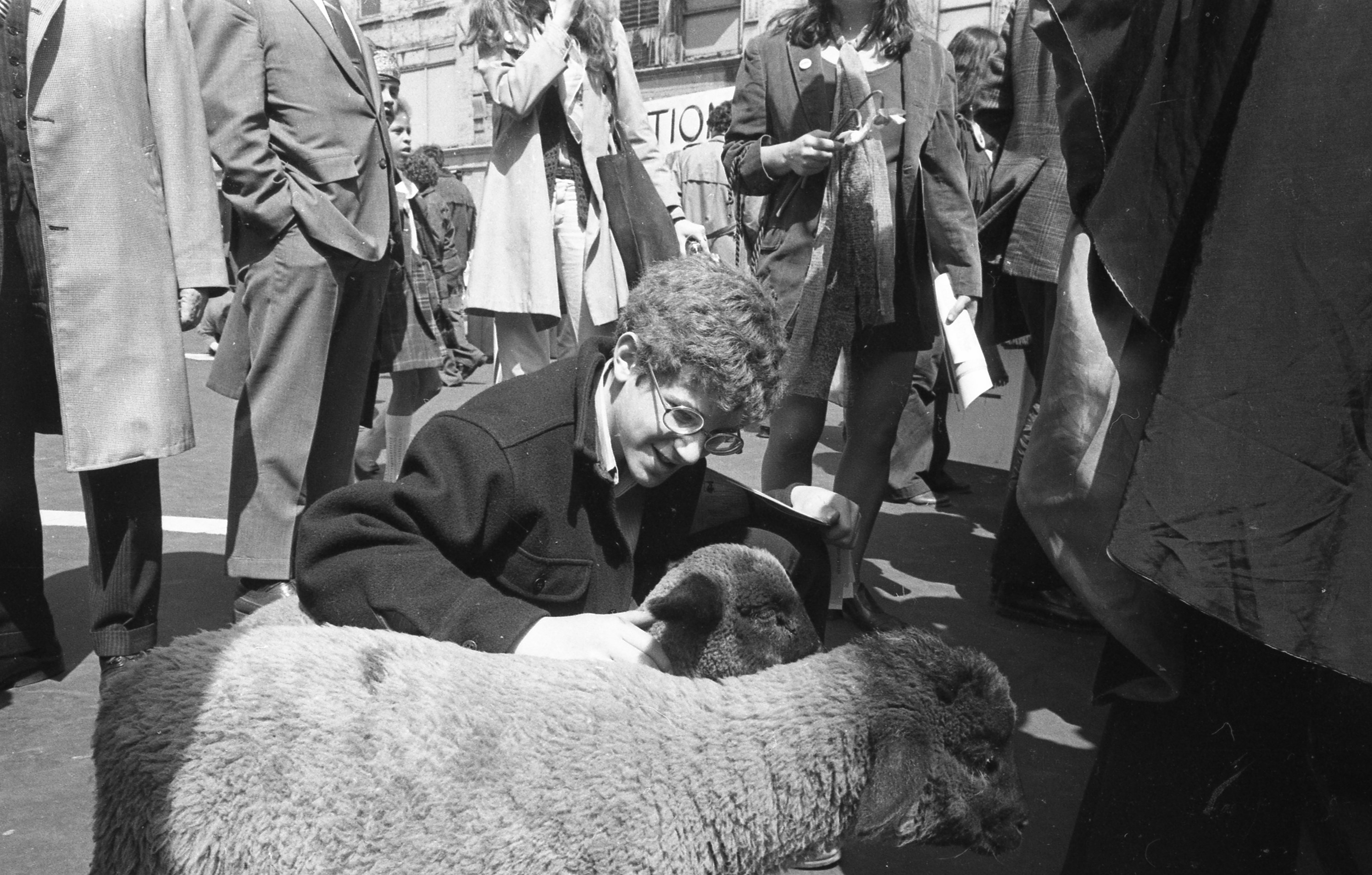 A man kneels down to pet two sheep in a crowd