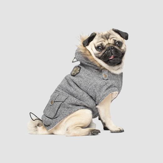 pug wearing parka