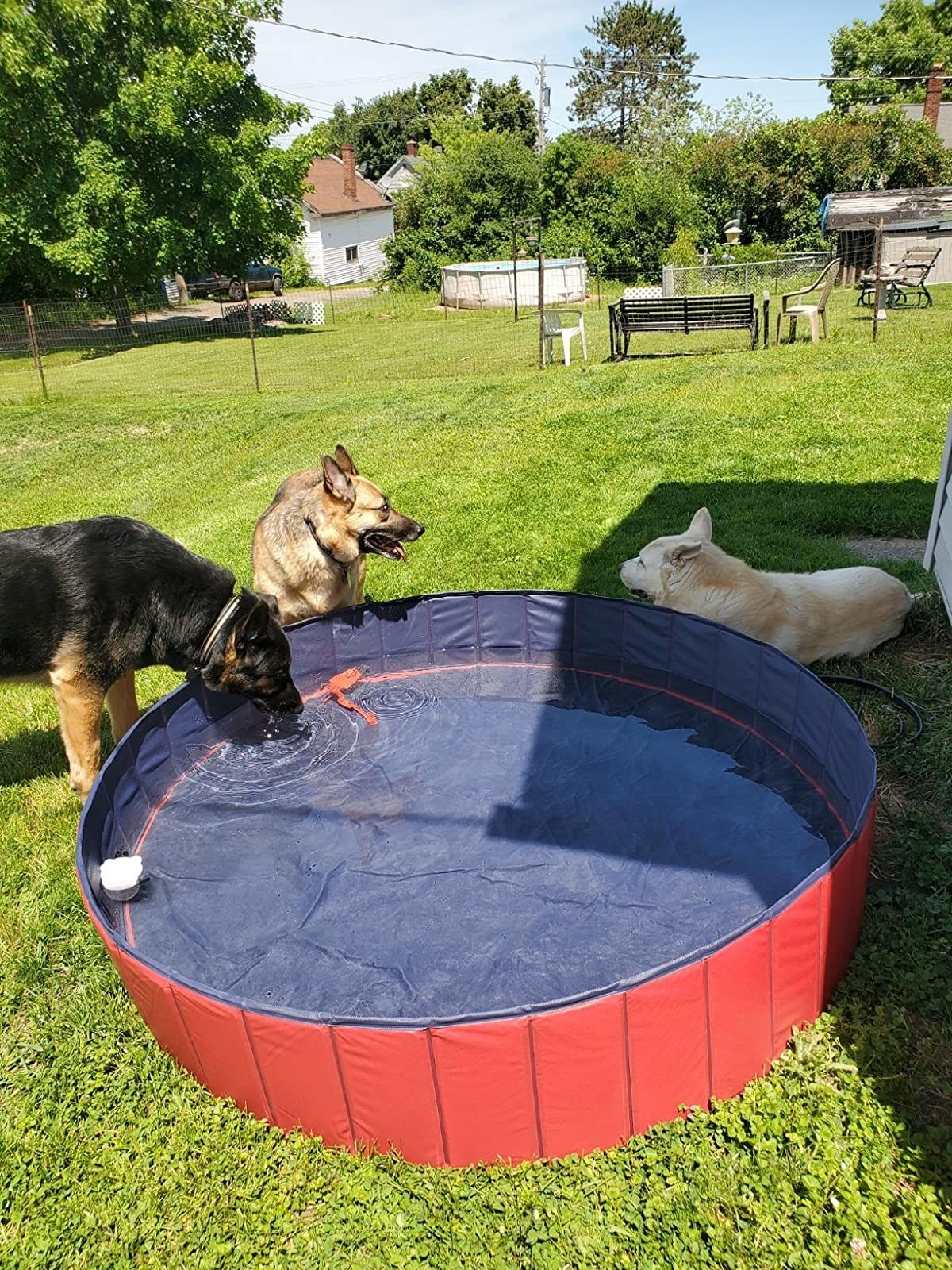 The pool, which is large enough for German Shepherds to play with
