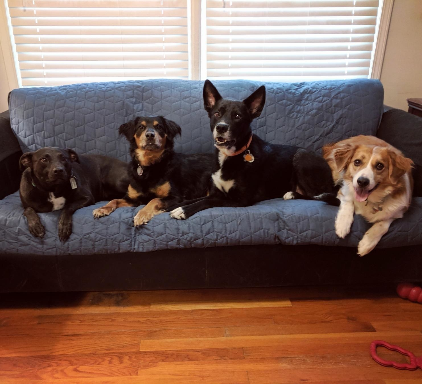 Dogs rest on a couch covered with this product, in blue