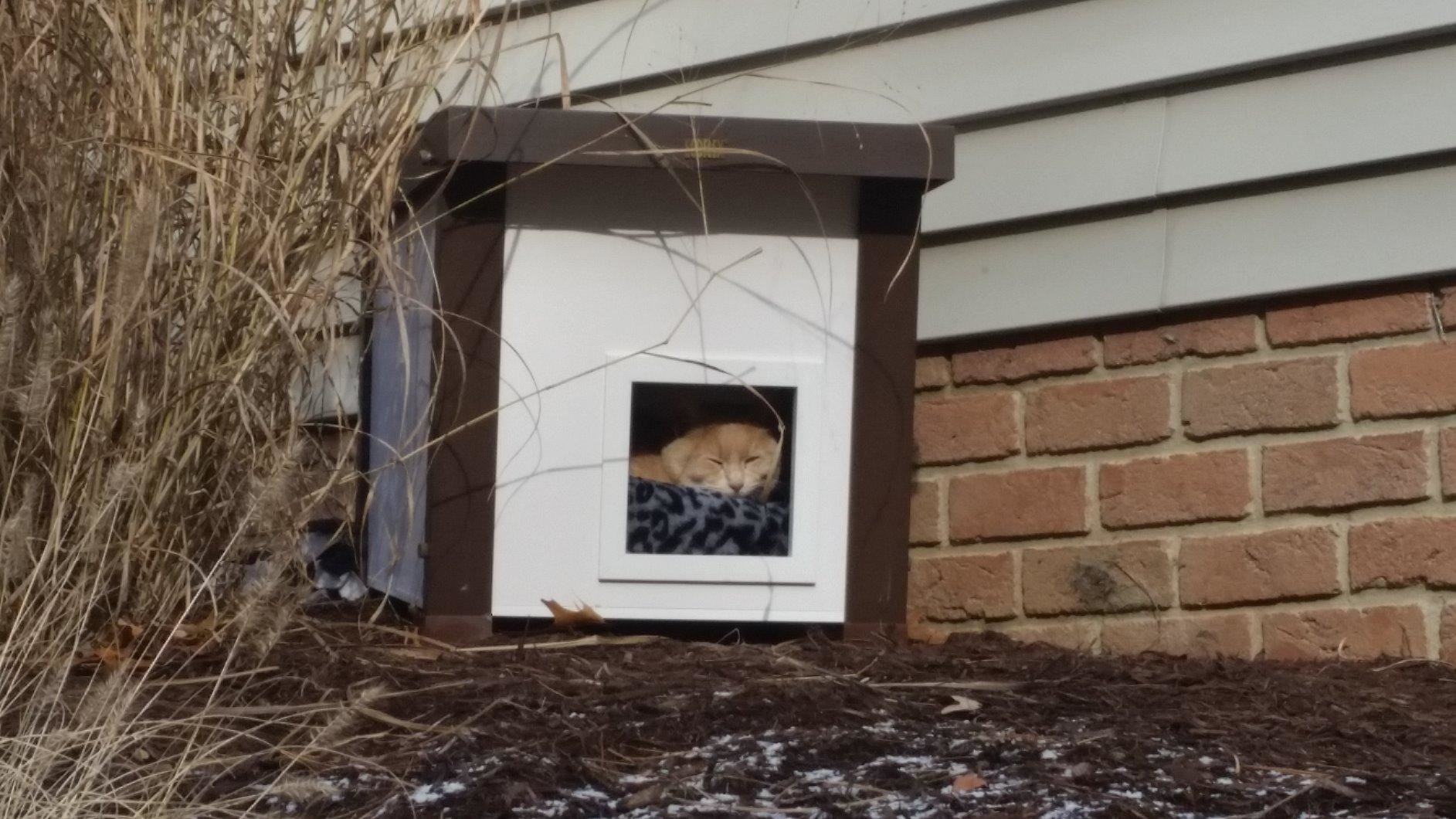 A feral cat asleep in the the house on a cold day