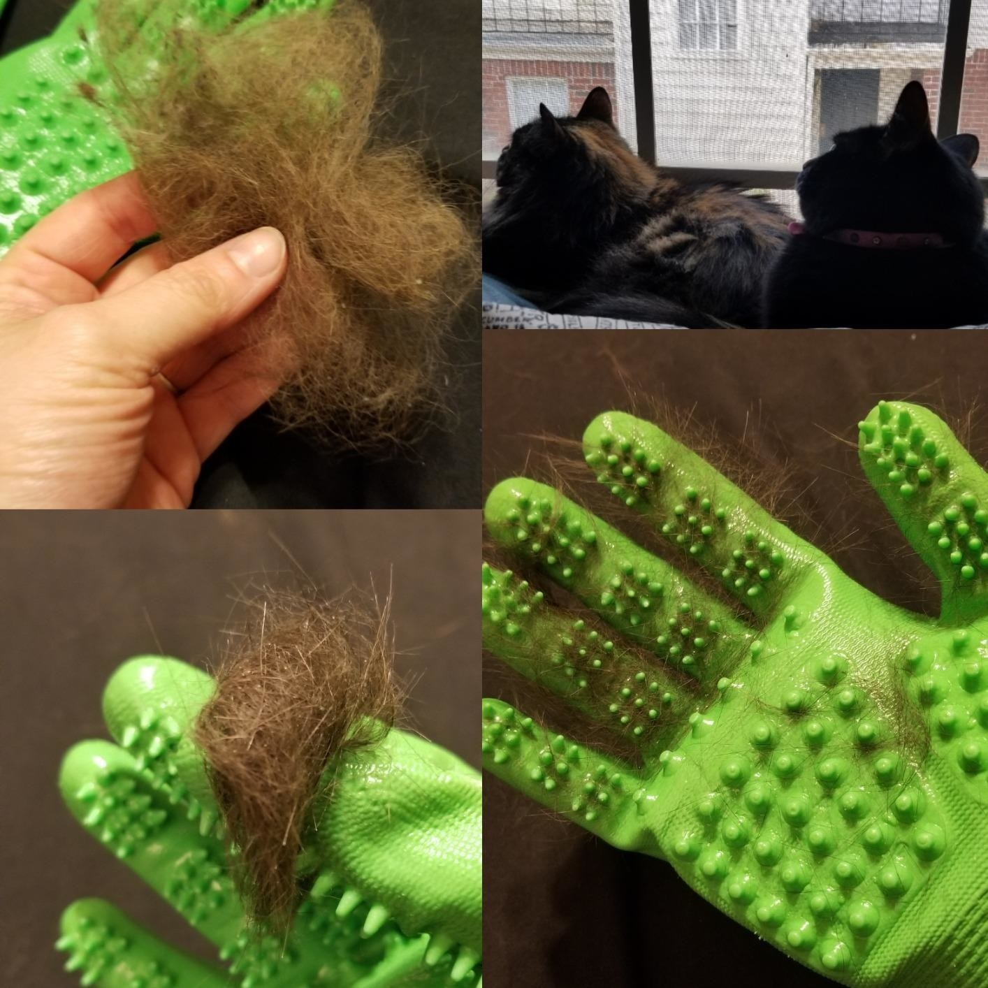 A demonstration of the cat hair the gloves can remove and how easy it is to get the hair off the gloves
