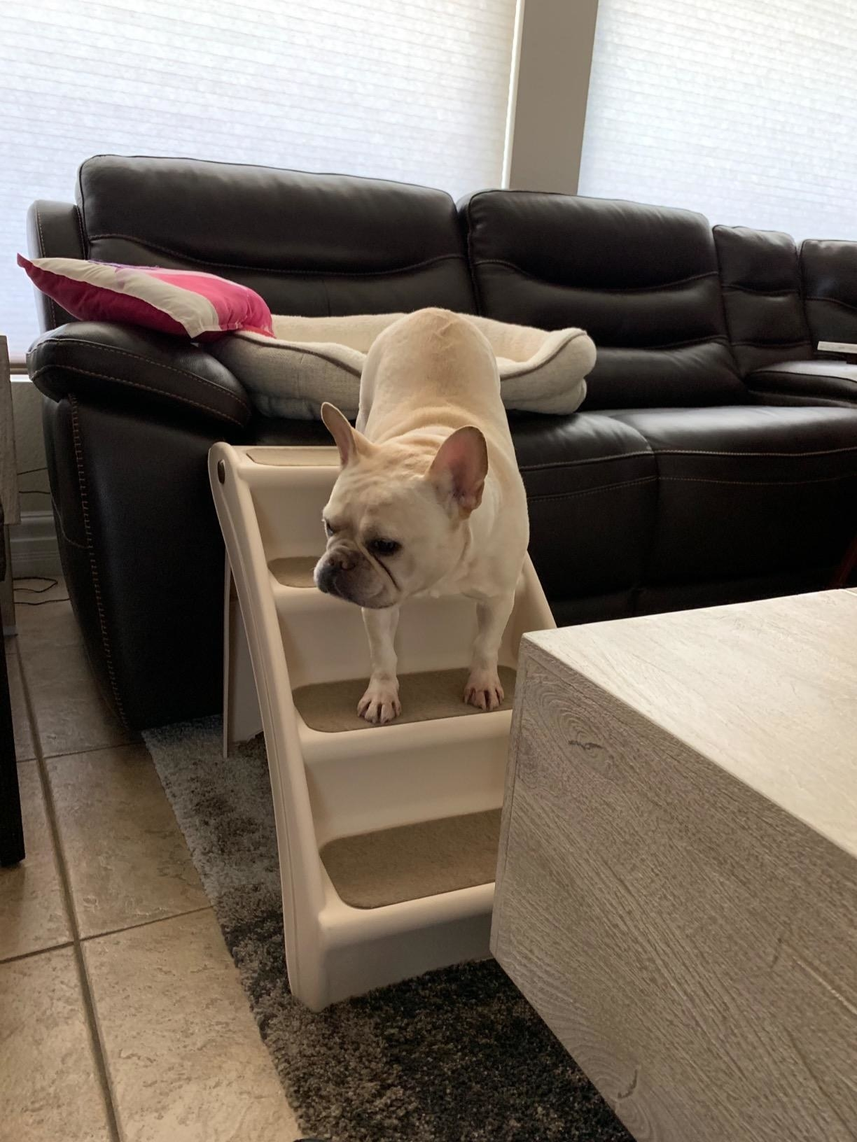 A dog climbs down from the couch using the steps