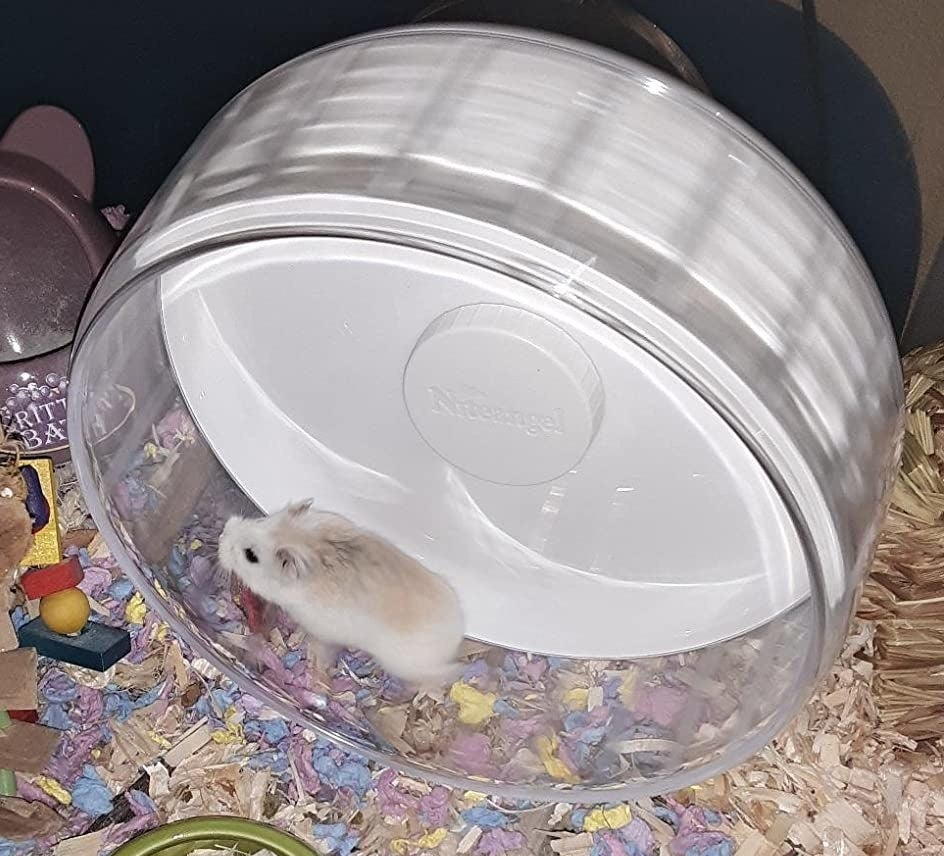 Thor the hamster uses their wheel
