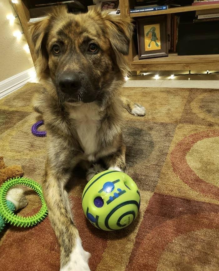 A dog next to a ball