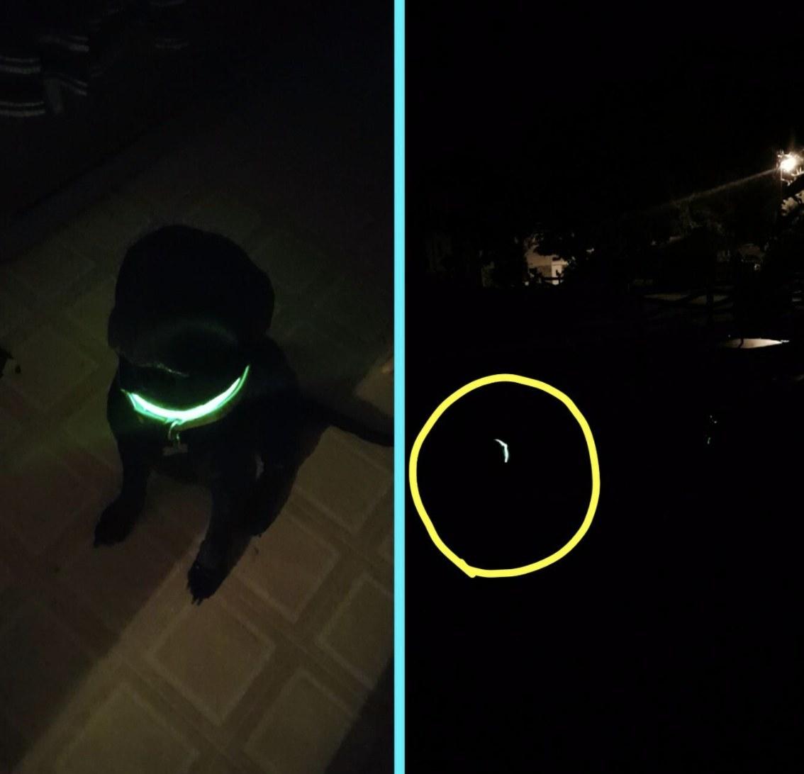 A dog wearing an LED collar in the dark
