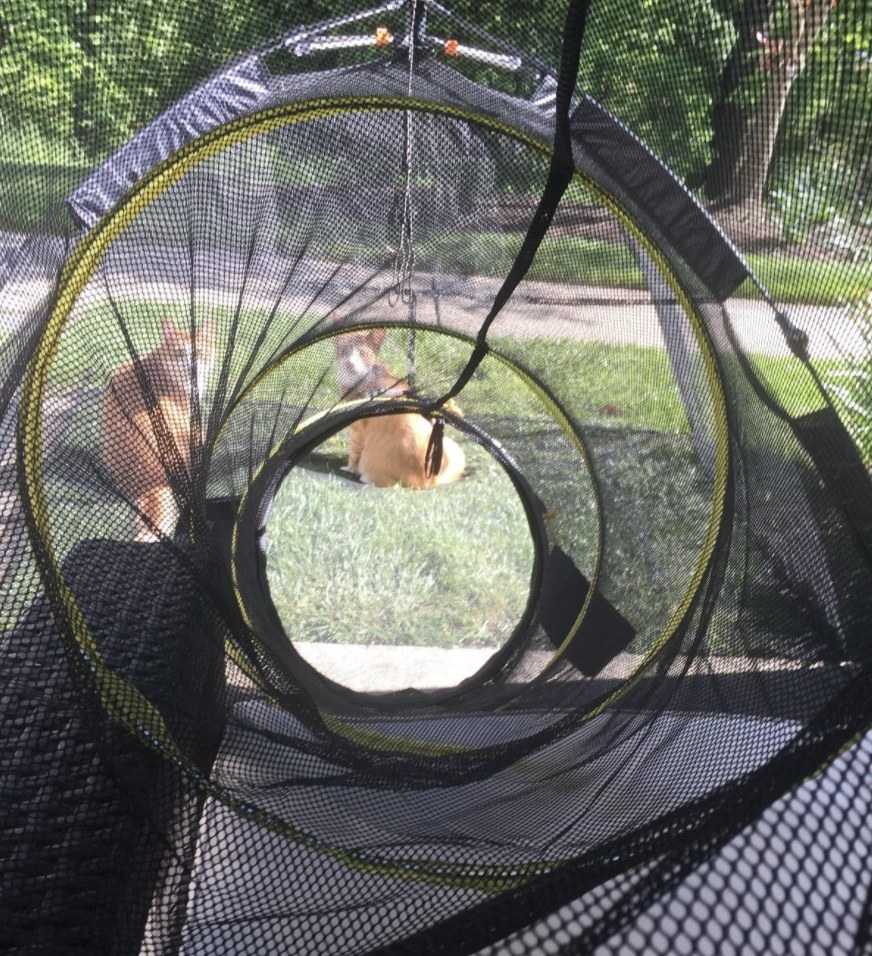Two cats inside an outdoor playhouse