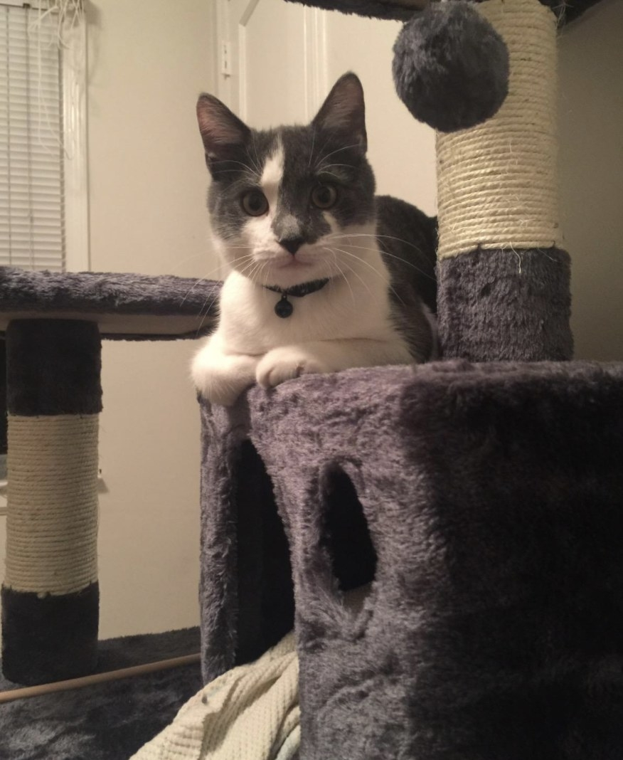 A cat lounging on a cat tower