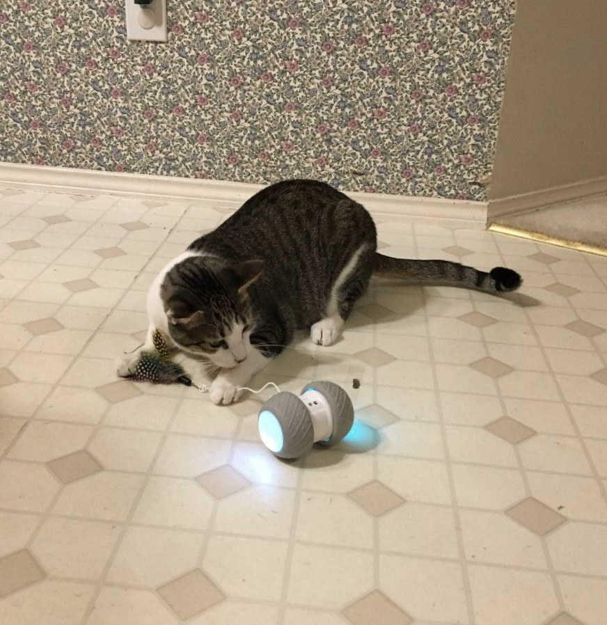 A cat playing with a self-rotating toy