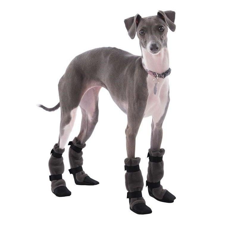 An Italian Greyhound dog with fleece booties on