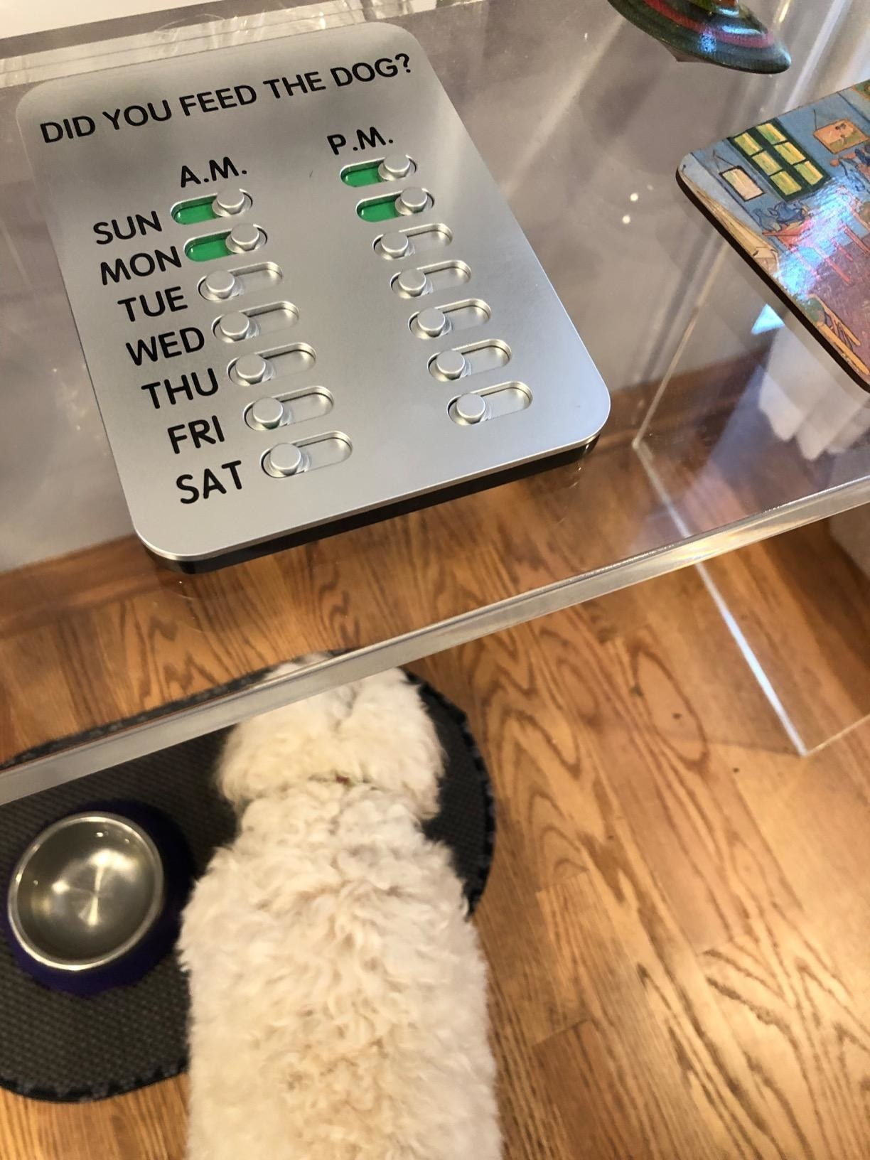 The a.m. p.m. feeding system sat on a table above a dog eating
