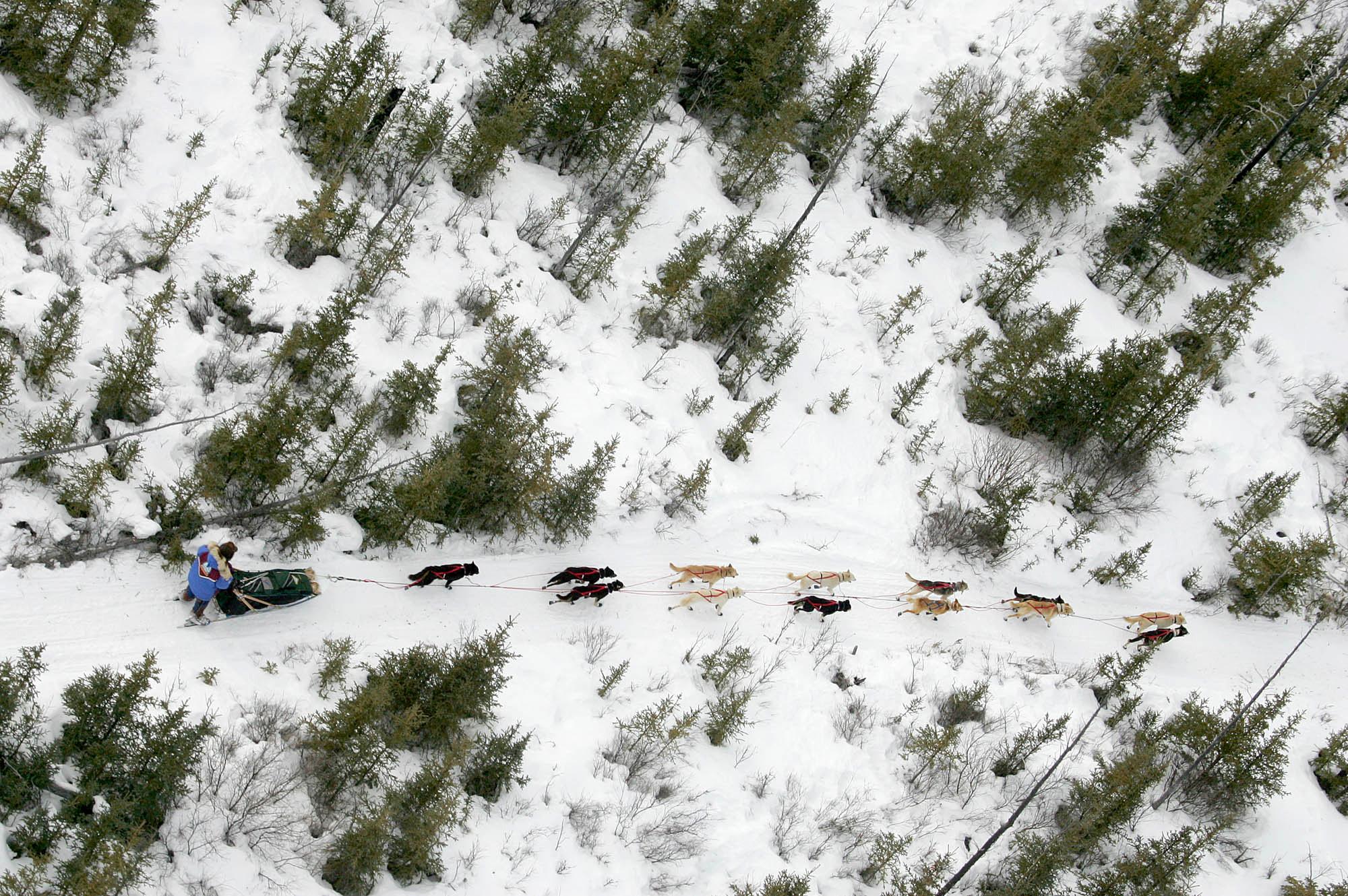 An overhead shot of dogs running through the woods